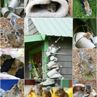 Squirreling Away in a Watering Can: Meet Dover, Nesco, Haws and Wheeling