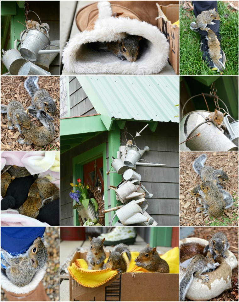 Baby squirrels nesting in watering can | ©homeiswheretheboatis.net