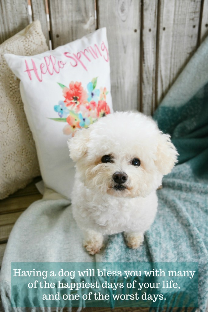 Having a dog will bless you with many of the happiest days of your life, and one of the worst days | ©homeiswheretheboatis.net #bichonfrise #nationaldogday