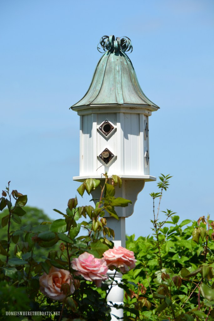 Carolina Wren in birdhouse | ©homeiswheretheboatis.net #birdhouse #birds #garden