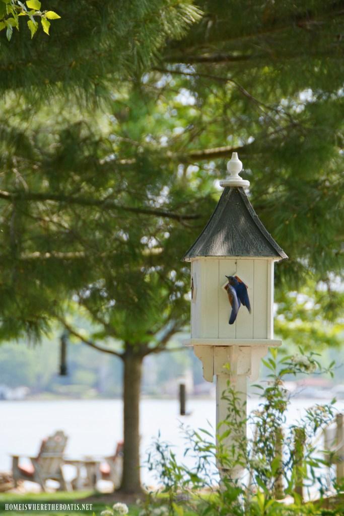 Bluebird at birdhouse | ©homeiswheretheboatis.net