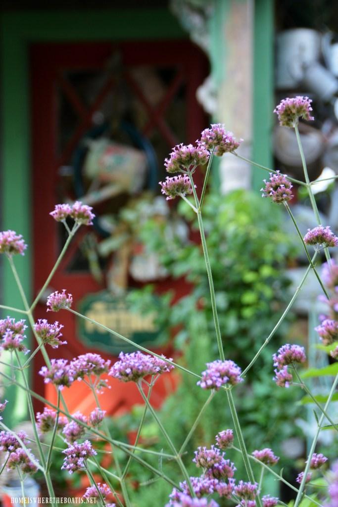 Verbena Lollipop | ©homeiswheretheboatis.net #flowers #garden #flowers