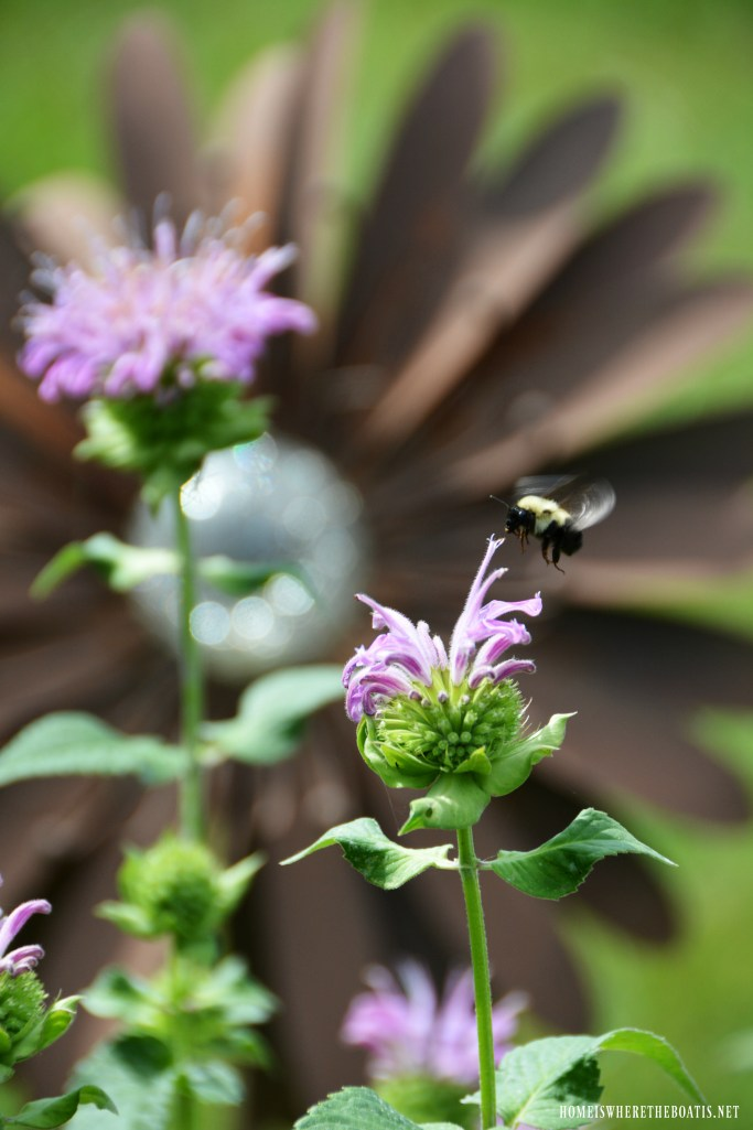 Bee and bee balm | ©homeiswheretheboatis.net #bees