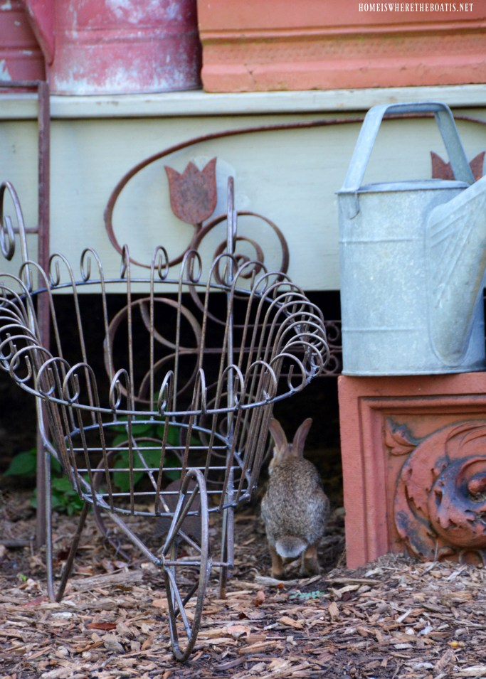 Bunny under Potting Shed | ©homeiswheretheboatis.net #spring #rabbit