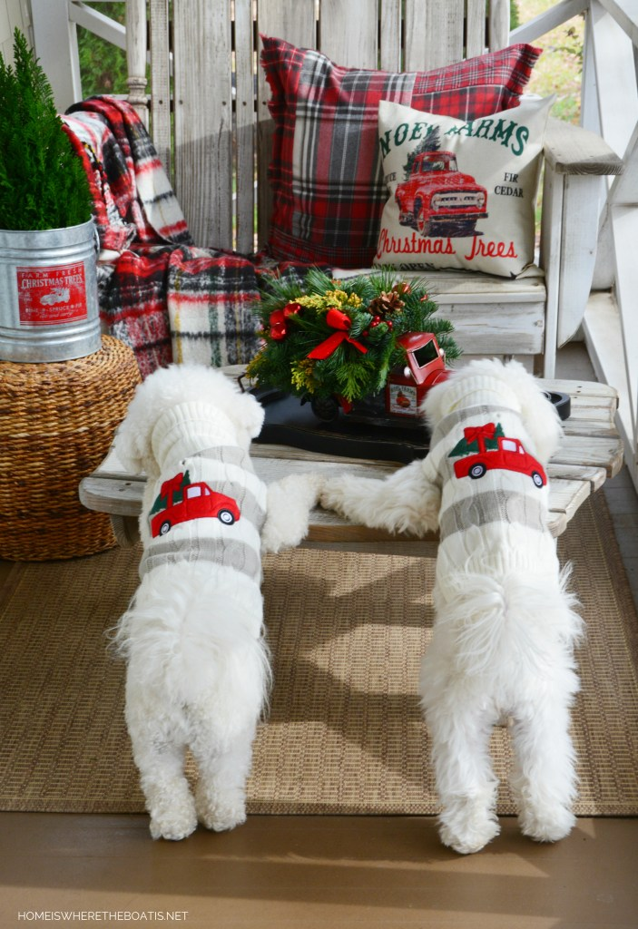 Christmas on the Porch with truck centerpiece and dogs in 'tree-in-truck' sweaters | ©homeiswheretheboatis.net #christmas #truck #porch #dogs