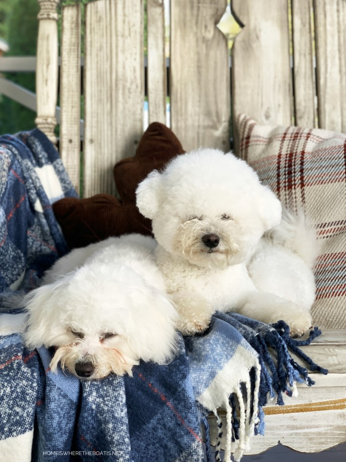 Lola and Sophie on porch | ©homeiswheretheboatis.net #bichonfrise #dogs