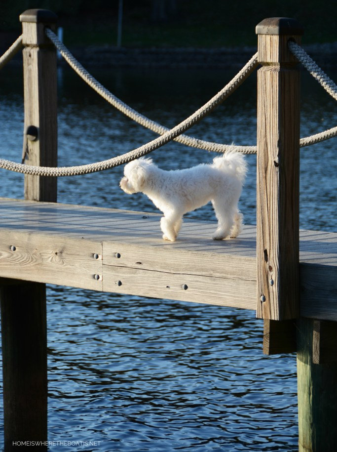 Sophie on dock | ©homeiswheretheboatis.net #LKN