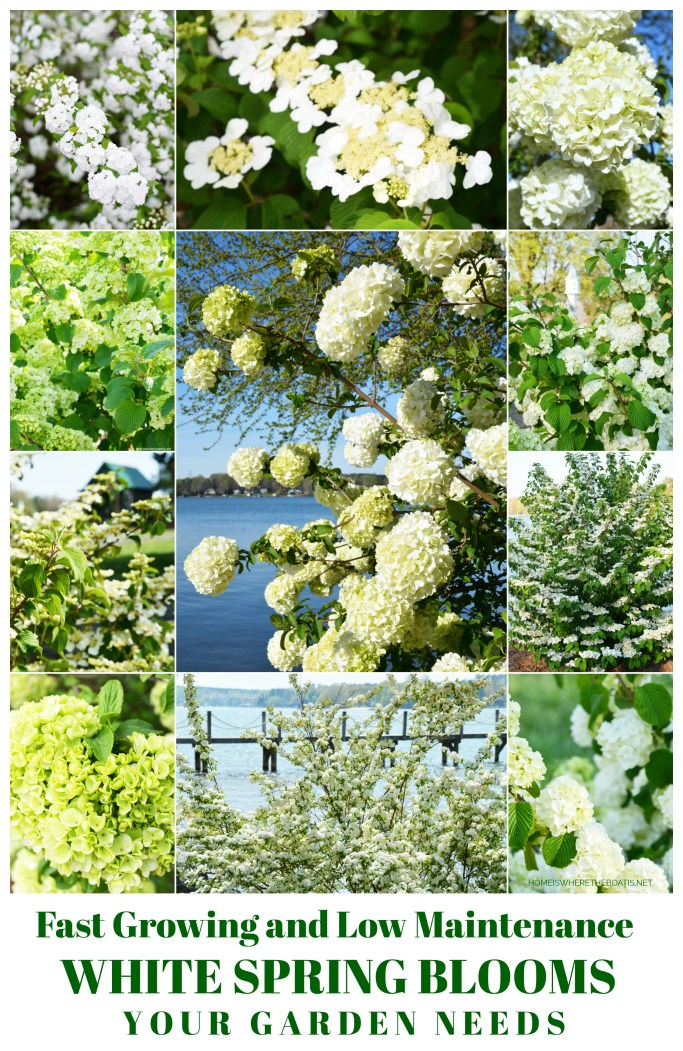 Fast Growing and Low Maintenance White Spring Blooms Your Garden Needs | ©homeiswheretheboatis.net #spring #flowers #garden