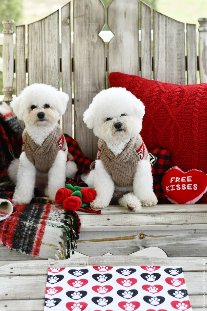 Happy Valentine's Day from Lola and Sophie | ©homeiswheretheboatis.net #valentinesday #dogs #BichonFrise