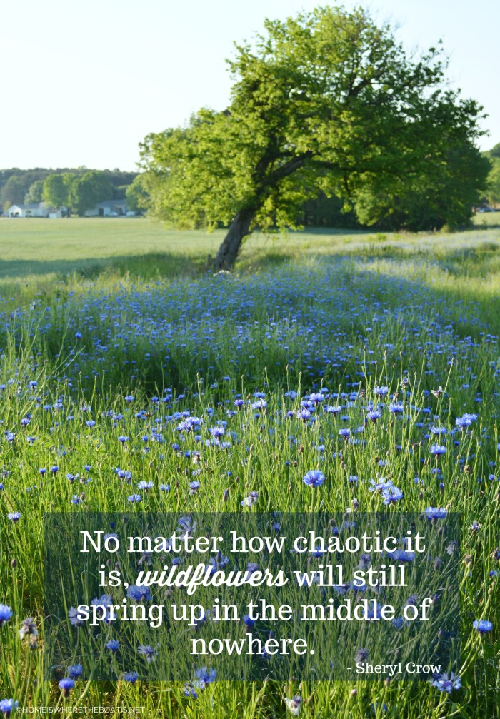 """No matter how chaotic it is, wildflowers will still spring up in the middle of nowhere.""  - Sheryl Crow"