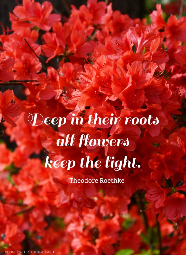 Deep in their roots all flowers keep the light. | ©homeiswheretheboatis.net #garden #quote