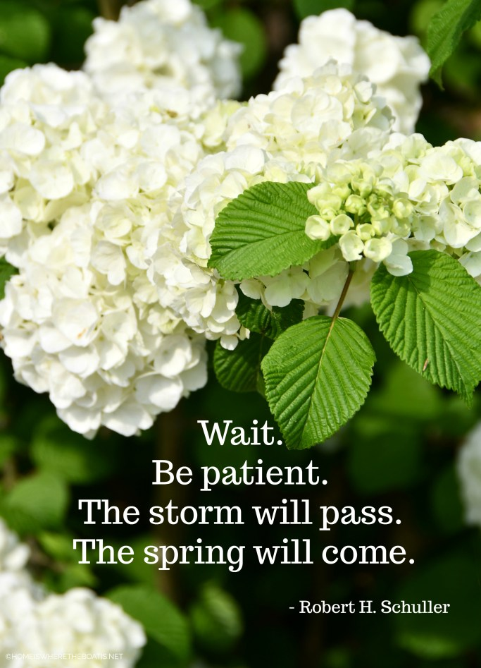 Wait. Be patient. The storm will pass. The spring will come. – Robert H. Schuller | ©homeiswheretheboatis.net
