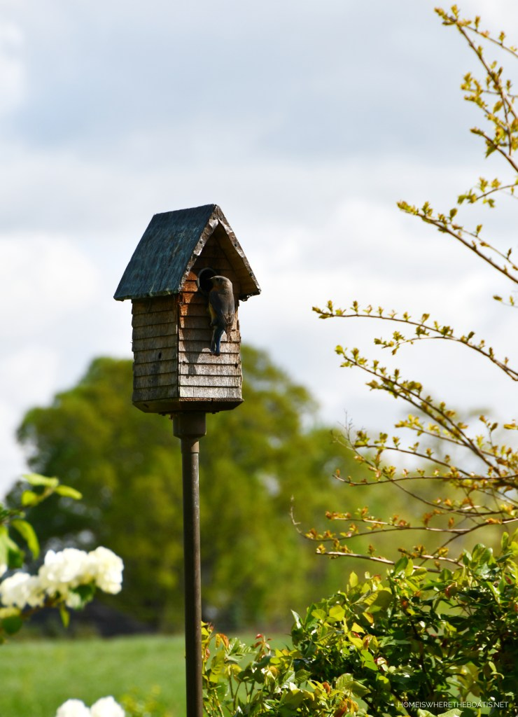 Bluebird on birdhouse | ©homeiswheretheboatis.net #flowers #spring #garden #bluebird