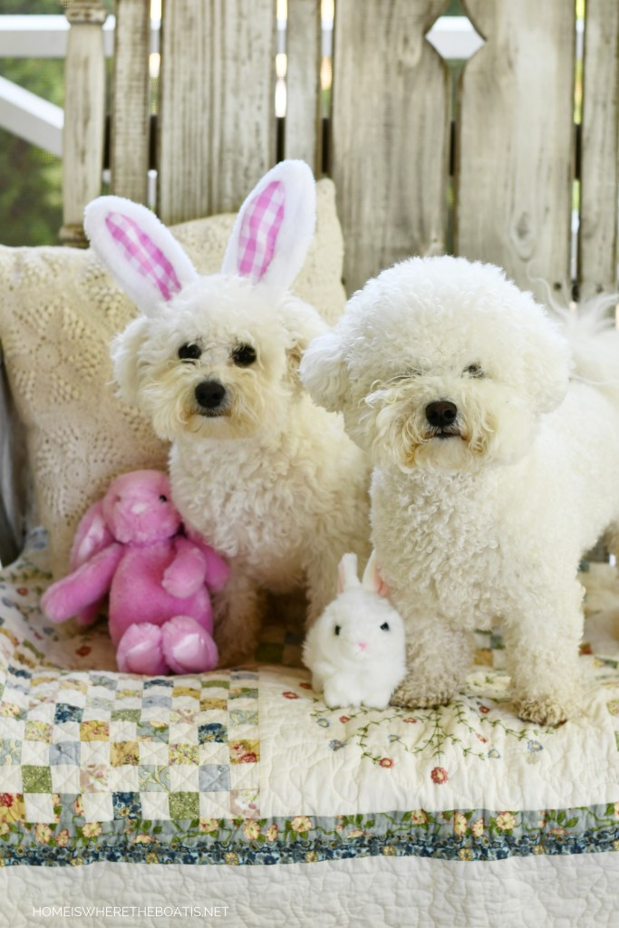 Happy Easter from Lola and Sophie | ©homeiswheretheboatis.net #dogs #bichonfrise #easter