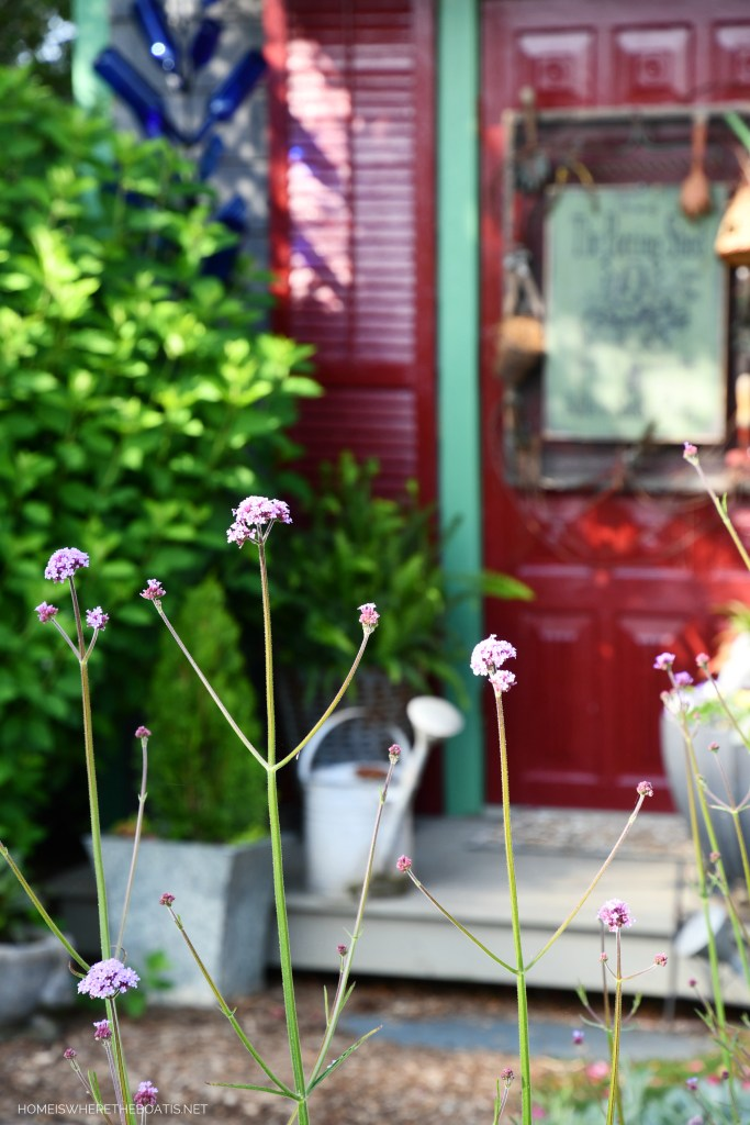 Verbena Lollipop | ©homeiswheretheboatis.net #flowers #pottingshed