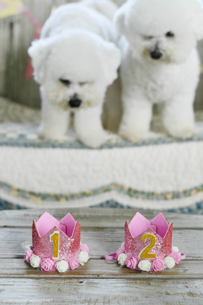 Sophie and Lola birthdays | ©homeiswheretheboatis.net #dog #bichonfrise
