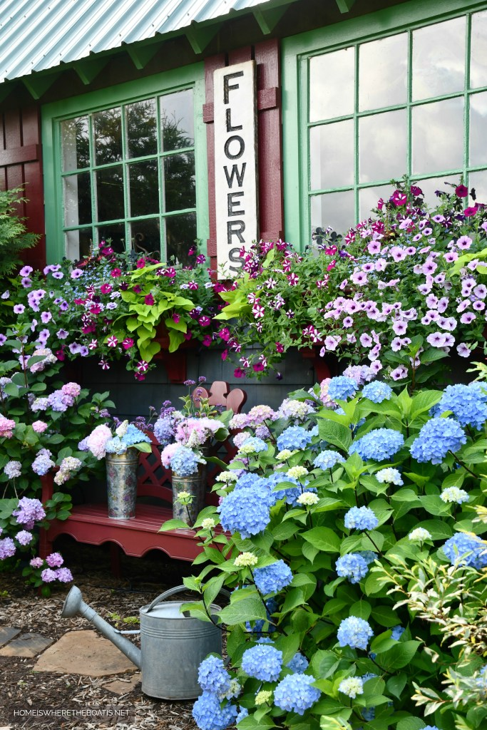 Flowers by the Potting Shed | ©homeiswheretheboatis.net #flowers #garden #hydrangeas #windowboxes