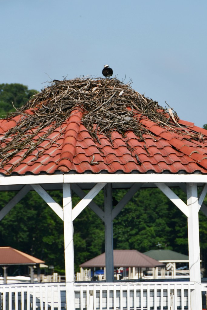 Osprey nest on dock gazebo | ©homeiswheretheboatis.net #lake