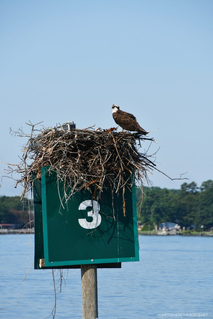 Osprey nest on channel marker | ©homeiswheretheboatis.net #lake