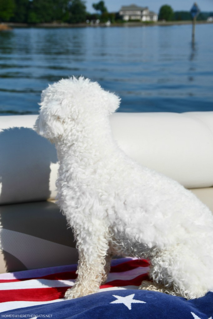 Boating with dogs | ©homeiswheretheboatis.net #flag #lake #bichonfrise ##pontoon