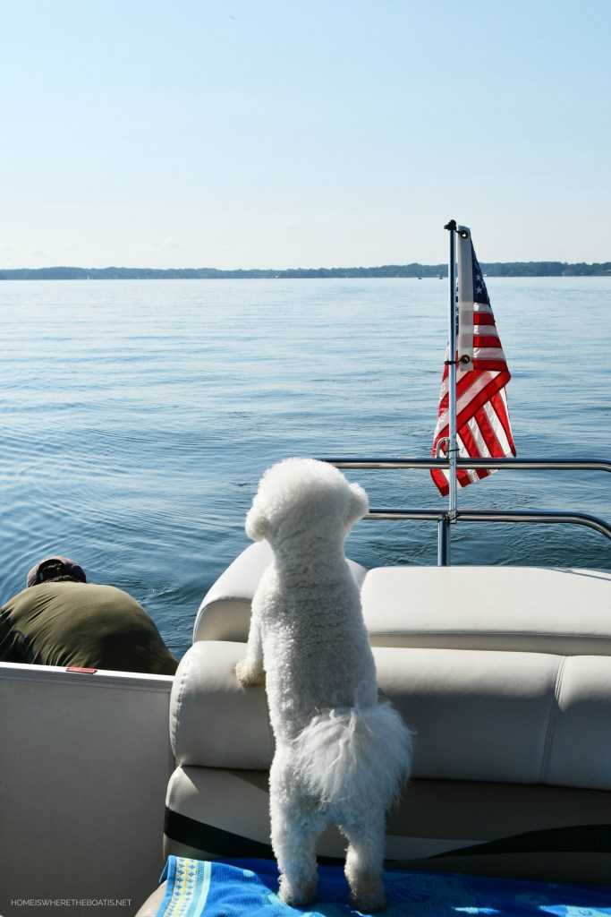Boating with dogs | ©homeiswheretheboatis.net #flag #lake #pontoon #bichonfrise