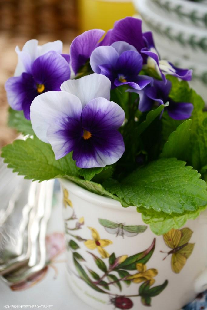 Violas in Portmeirion Botanic Garden | ©homeiswheretheboatis.net #spring #portmeirion