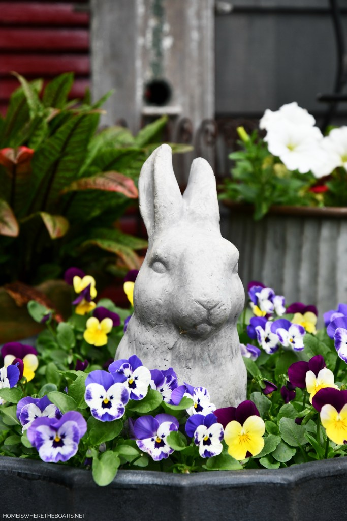 Bunny with violas in planter | ©homeiswheretheboatis.net #flowers #garden