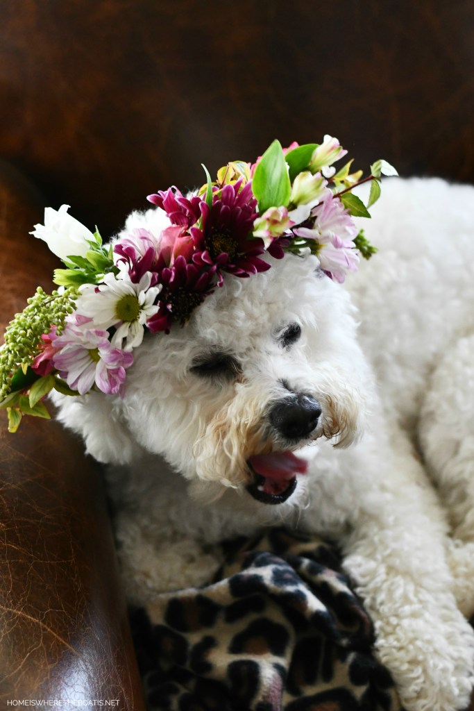 How to Make a Flower Crown for You or Your Pup! | ©homeiswheretheboatis.net #flowers #dogs #bichonfrise