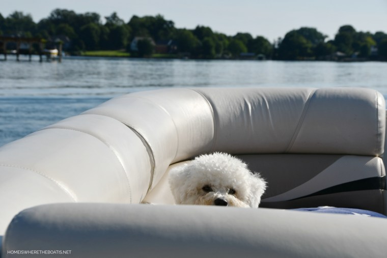 Sophie on pontoon | ©homeiswheretheboatis.net #lake #LKN #boatingwithdogs #pontoon