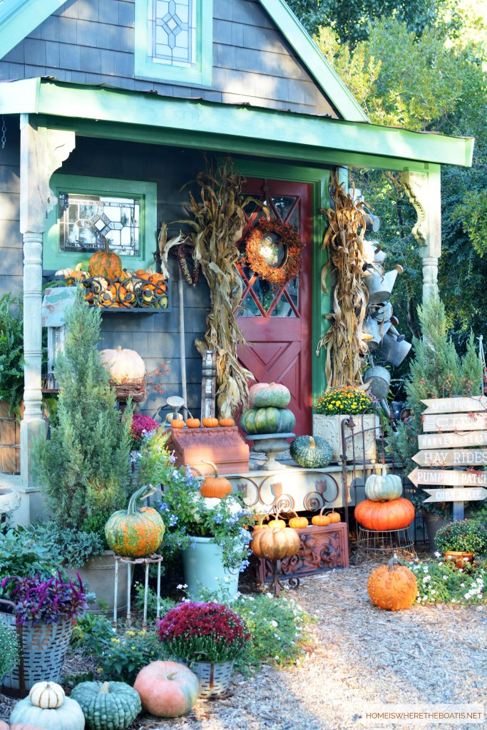 Potting Shed Fall Harvest | ©homeiswheretheboatis.net #fall #shed #pumpkins #mums