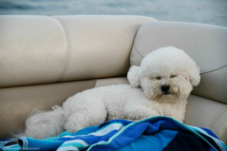 Weekend Waterview Dog Days of Summer | ©homeiswheretheboatis.net #lake #dogs