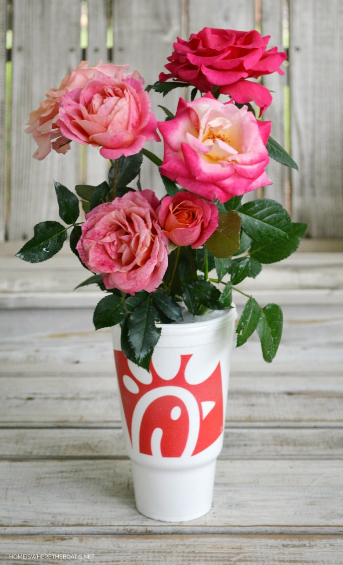 A Blooming Pumpkin from a Chick-fil-A Bouquet | homeiswheretheboatis.net