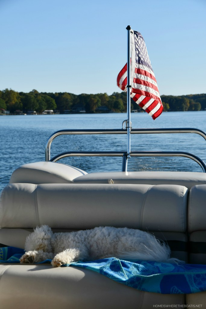 Sophie sleeping on pontoon | ©homeiswheretheboatis.net #LKN #lake #boatingwithdogs #bichofrise