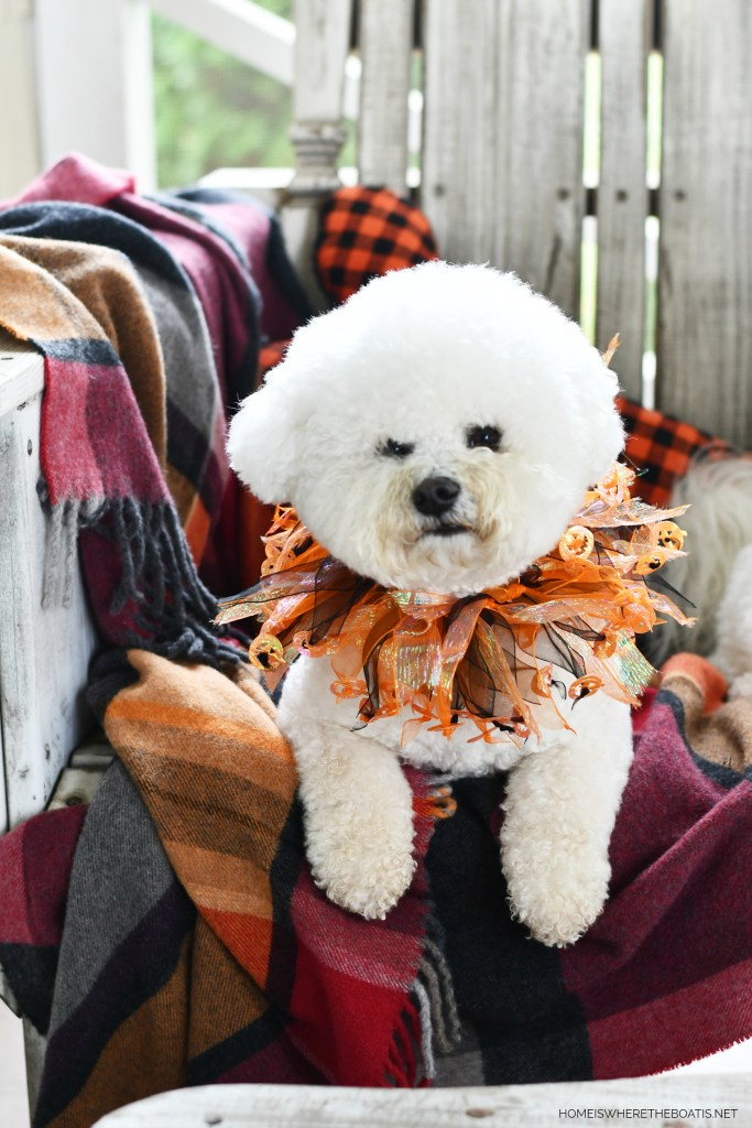 Happy Howl-oween from Lola and Sophie | ©homeiswheretheboatis.net #dogs #halloween #bichonfrise