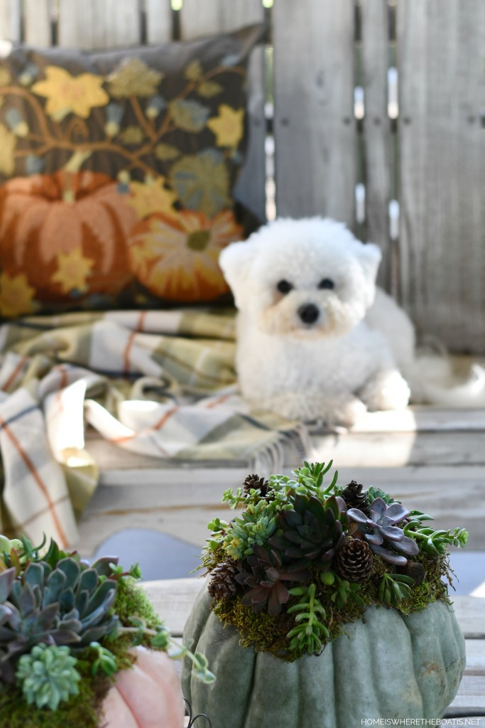Sophie on porch | ©homeiswheretheboatis.net #dogs #fall #pumpkin #succulents #DIY