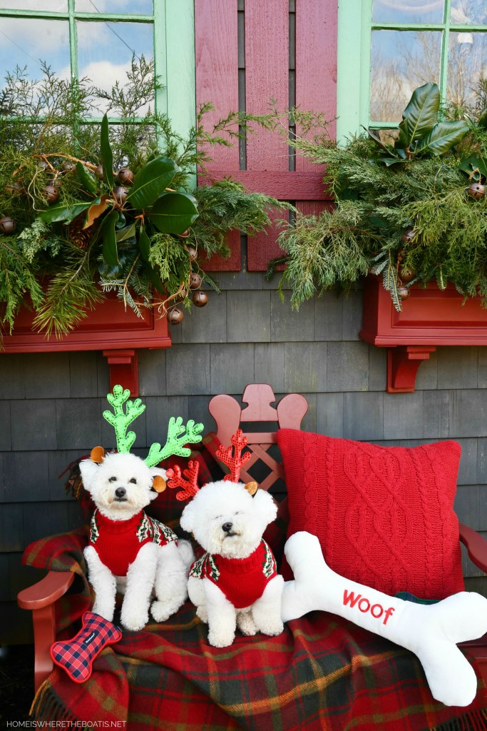 Happy Pawlidays from Lola and Sophie | ©homeiswheretheboatis.net #dogs #bichonfrise #christmas