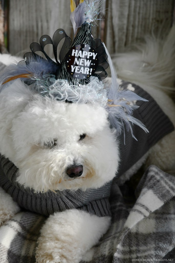 Lola Happy New Year party hat | ©homeiswheretheboatis.net #dogs #bichonfrise #newyear