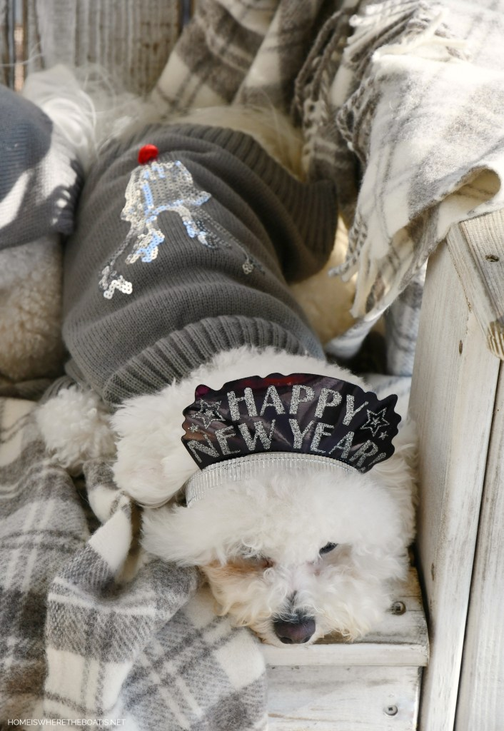 Sophie Happy New Year party hat | ©homeiswheretheboatis.net #dogs #bichonfrise #newyear