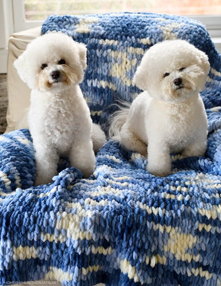 Lola and Sophie and DIY EZ Loop Yarn Throw Blanket | ©homeiswheretheboatis.net #DIY #craft #yarn #noknit #blanket #dogs