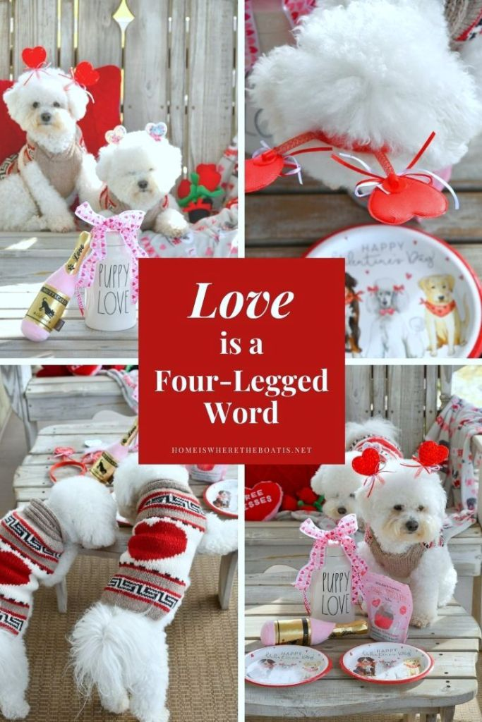 Love is a four-legged word | ©homeiswheretheboatis.net #dogs #valentinesday #bichonfrise