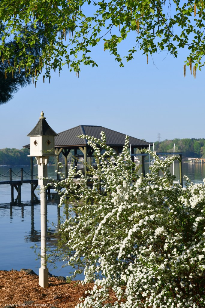 Weekend Waterview: Bridal Wreath Spirea ©homeiswheretheboatis.net #LKN #lakenorman