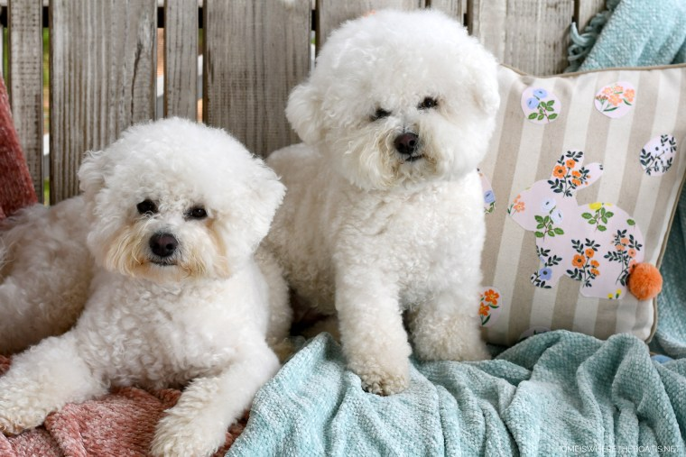 Lola and Sophie | ©homeiswheretheboatis.net #dogs #bichonfrise #easter
