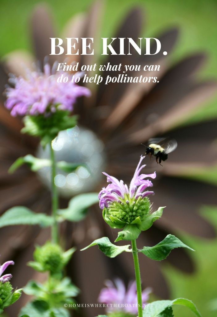 Bee Kind to our pollinators as the decline of bees affects us all | ©homeiswheretheboatis.net #bees #flowers #garden