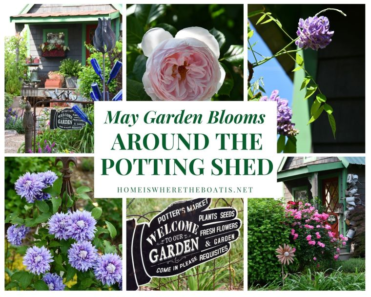 May Garden Blooms Around the Potting Shed | ©homeiswheretheboatis.net #garden #flowers