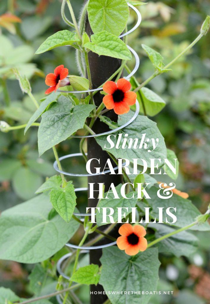 Slinky Garden Hack: Use a Slinky as a support and trellis for a climbing vine! | ©homeiswheretheboatis.net #garden #trellis #hack #flower #Slinky