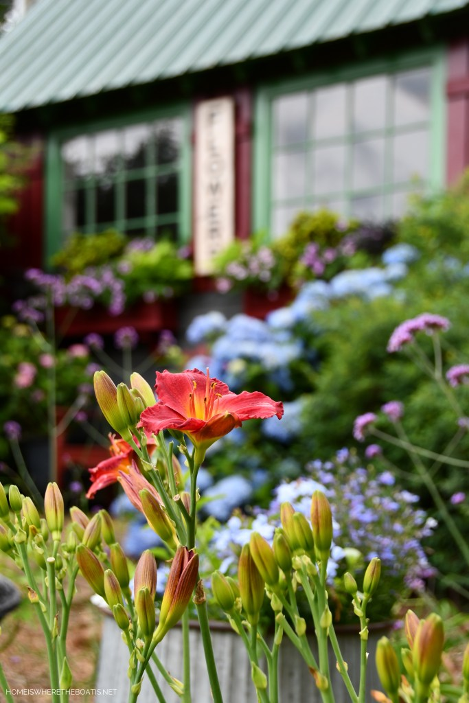 Blooming Window Boxes and Garden Flowers Around the Potting Shed | ©homeiswheretheboatis.net #hydrangeas #garden #flowers #windowboxes