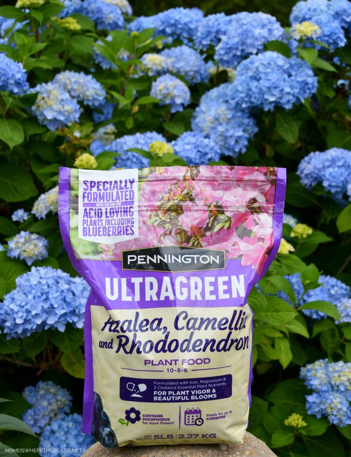 Pennington UltraGreen Azalea, Camellia & Rhododendron Plant Food for Blue Endless Summer Hydrangeas | ©homeiswheretheboatis.net #hydrangeas #garden #flowers