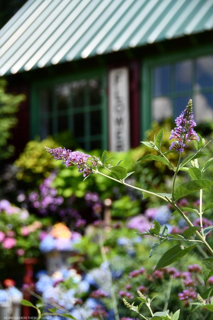 Summer Garden Blooms Around the Potting Shed | ©homeiswheretheboatis.net #summer #garden
