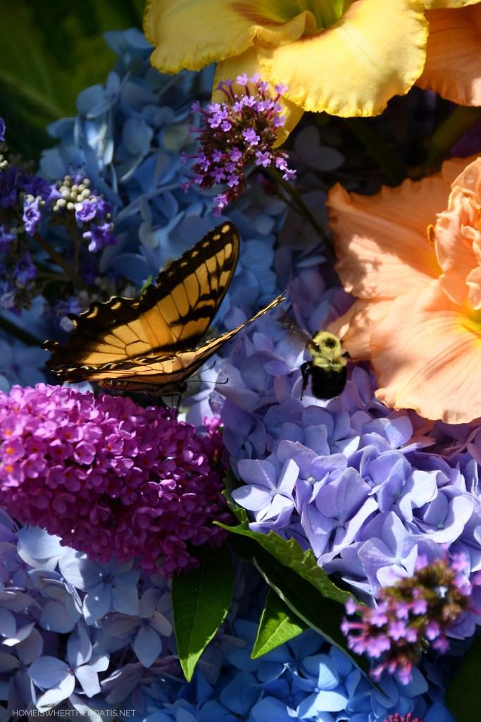 Eastern Tiger Swallowtail butterfly and bumblebee on flowers | ©homeiswheretheboatis.net #summer #garden #flowers #daylilies #hydrangeas #bees #butterflies