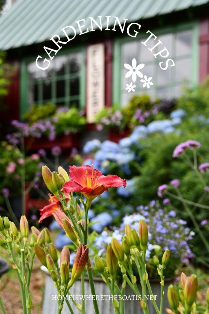 Gardening Tips for growing hydrangeas, daylilies and plants that pollinators love | ©homeiswheretheboatis.net #hydrangeas #garden #flowers #windowboxes